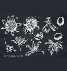 Set hand drawn chalk passion flower vector