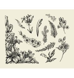 Flowers Hand drawn sketch flower lily fern vector image vector image