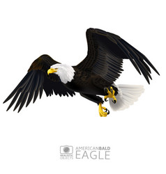 American bald eagle isolated vector