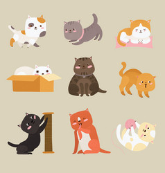 cute cats cartoon funny tabby kittens playing vector image