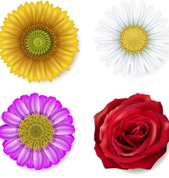 different flowers vector image vector image