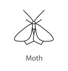Moth linear icon vector
