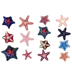 Set sea starfishes for design vector