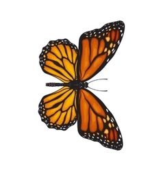Top view of beautiful monarch butterfly isolated vector