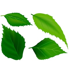 Tree Leafs vector image