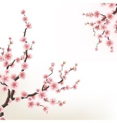 blossoming branch sakura eps 10 vector image
