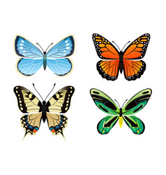 Butterflies kinds collection vector