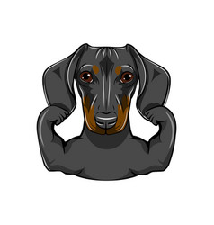 Portrait dachshund dog with muscules vector