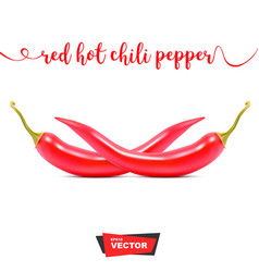 two realistic red hot chili peppers on white vector image