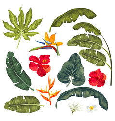 set of exotic tropical leaves isolated vector image