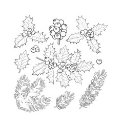 fir tree and mistletoe branches leaves berries vector image