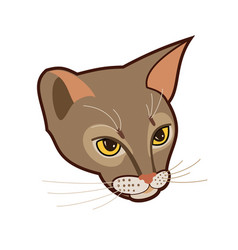 Abyssinian cat head isolated vector