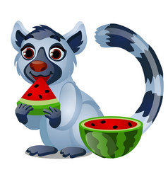 cute lemur eating a ripe juicy watermelon isolated vector image