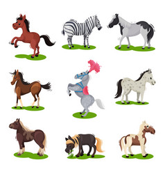 flat set of different horses hoofed mammal vector image