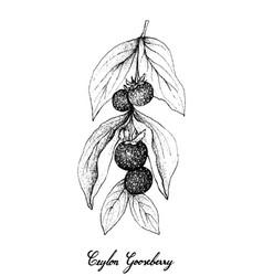 Hand drawn of ceylon gooseberries on white backgro vector