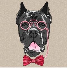 hipster dog Cane Corso breed vector image