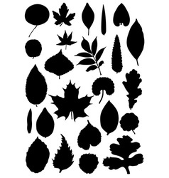 Leaf silhouette collection vector image