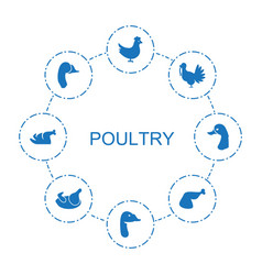 8 poultry icons vector image