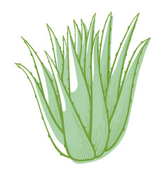 aloe flower icon cactus for botanical decoration vector image
