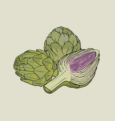 Artichoke hand drawn isolated composition with vector