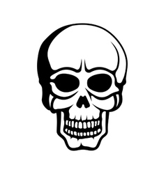 Human skull on white background vector