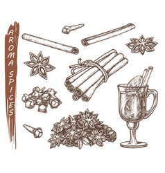 set isolated sketches for aroma spices vector image