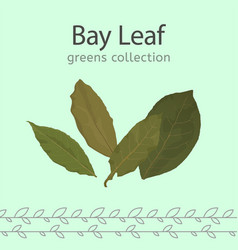 Bay leaf image vector