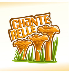 chanterelles mushrooms vector image