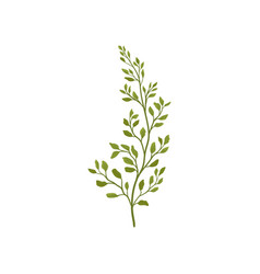 fern branch with small green foliage forest plant vector image
