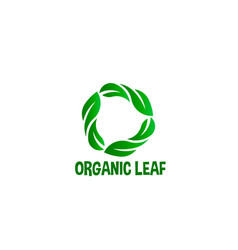 organic leaf circle logo vector image
