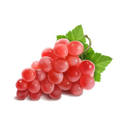 red or pink grapes banch realistic vector image