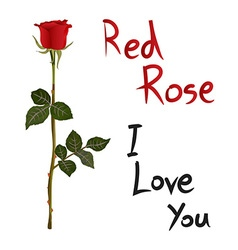 Red rose meaning vector