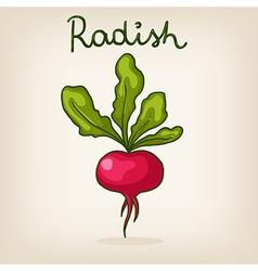 hand drawn shiny radish vector image