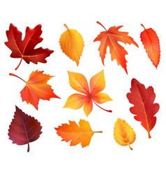 Autumn foliage leaf icons of falling leaves vector