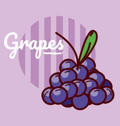 grapes fruits cartoon vector image