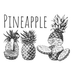 hand drown tropical fruits set with pineapple cut vector image