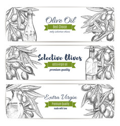Olive oil banners of sketch olives vector
