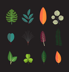 Exotic tropical leaf icons set forest tree leaves vector