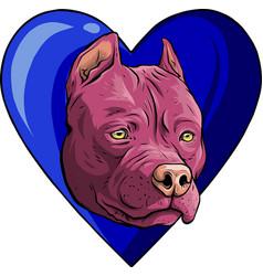 Head pitubull dog with vector