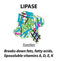 Molecular structural chemical formula lipase vector