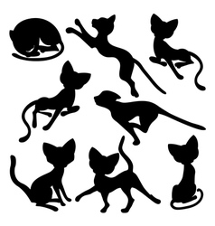Eight silhouettes of funny cats vector image vector image