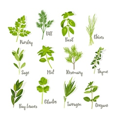 Set of herbs isolated vector image
