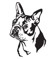 Decorative portrait of dog boston terrier vector