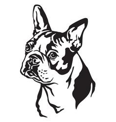 decorative portrait of dog boston terrier vector image