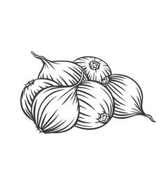 pile onion bulbs vector image