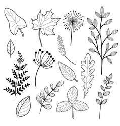 set of botany sketches and line doodles vector image