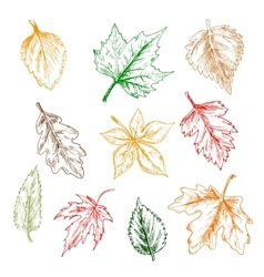 Trees and plants leaves pencil sketch set vector