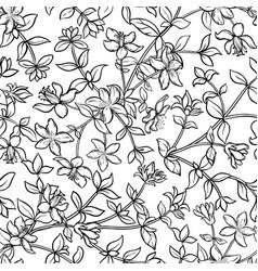 tutsan seamless pattern vector image