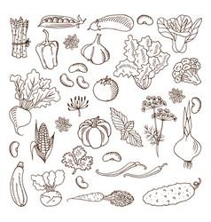 vegetables design elements vector image