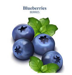 blueberries isolated on white backgrounds vector image